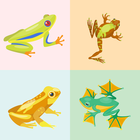 Frog cartoon tropical animal cartoon nature icon funny and isolated mascot character wild funny forest toad amphibian vector illustration. Stock Vector - 74235478