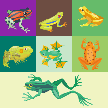 Frog cartoon tropical animal cartoon nature icon funny and isolated mascot character wild funny forest toad amphibian vector illustration. Stock Vector - 74317291