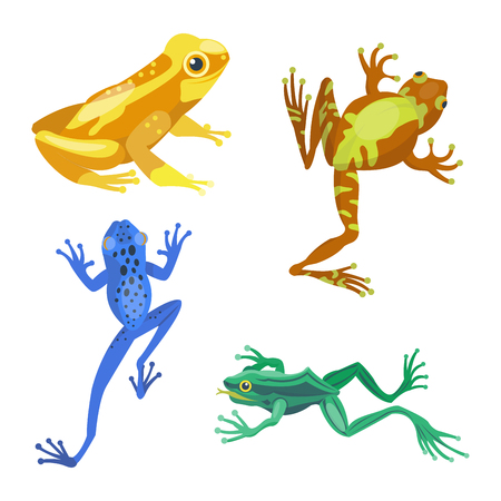 Frog cartoon tropical animal cartoon nature icon funny and isolated mascot character wild funny forest toad amphibian vector illustration. Stock Vector - 74317293