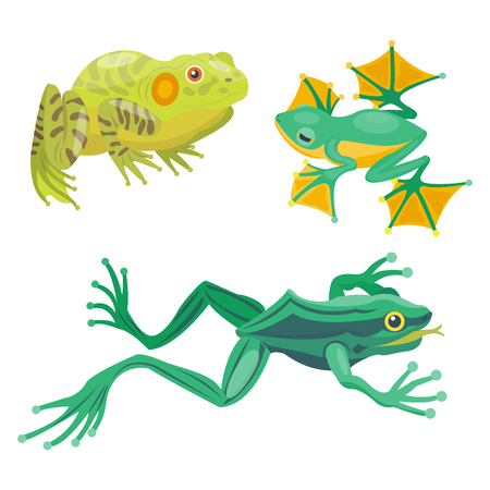 croaking: Frog cartoon tropical animal cartoon nature icon