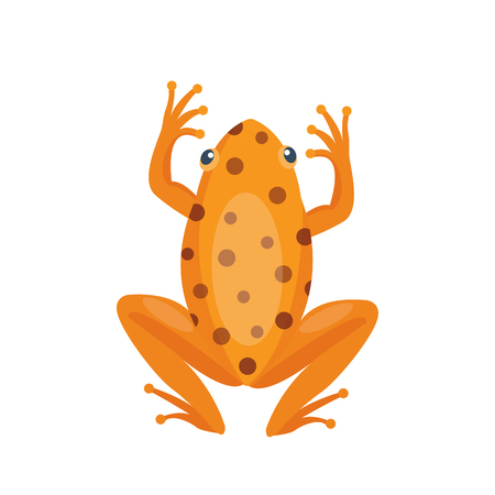Frog cartoon tropical brown animal cartoon nature icon funny and isolated mascot character wild funny forest toad amphibian vector illustration. Stock Vector - 74505823