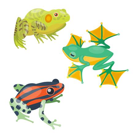Frosch Cartoon tropischen Tier Cartoon Natur Ikone lustig und isoliert Maskottchen Charakter wilden lustigen Wald Kröte Amphibien Vektor-Illustration. Vektorgrafik