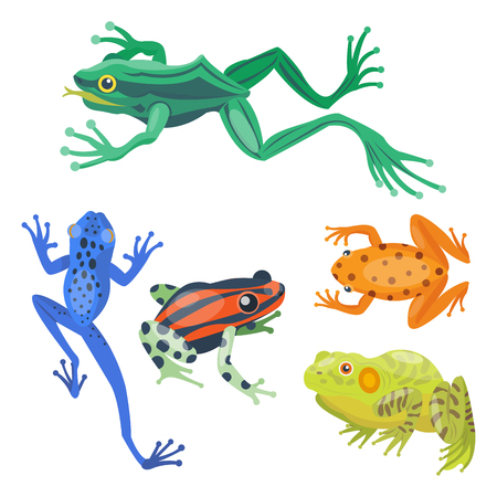 croaking: Frog cartoon tropical animal cartoon nature icon funny and isolated mascot character wild funny forest toad amphibian vector illustration.