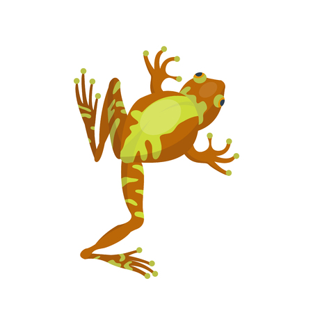 Frog cartoon tropical brown animal cartoon nature icon funny and isolated mascot character wild funny forest toad amphibian vector illustration.