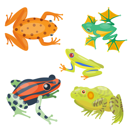 Frog cartoon tropical animal cartoon nature icon funny and isolated mascot character wild funny forest toad amphibian vector illustration. Stock Vector - 74881047