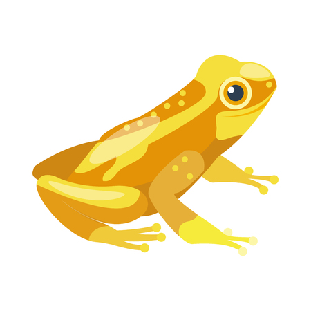 Frog cartoon tropical yellow animal cartoon nature icon funny and isolated mascot character wild funny forest toad amphibian vector illustration.