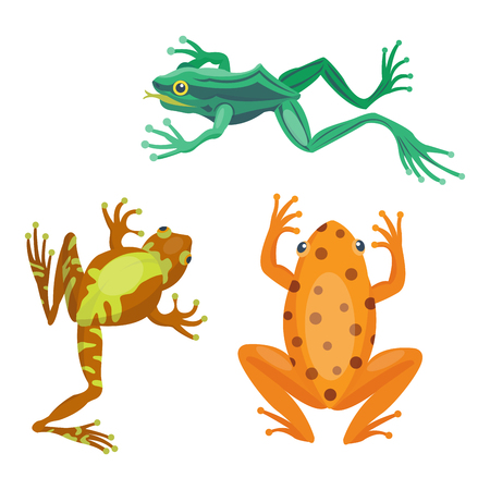 Frog cartoon tropical animal cartoon nature icon funny and isolated mascot character wild funny forest toad amphibian vector illustration.