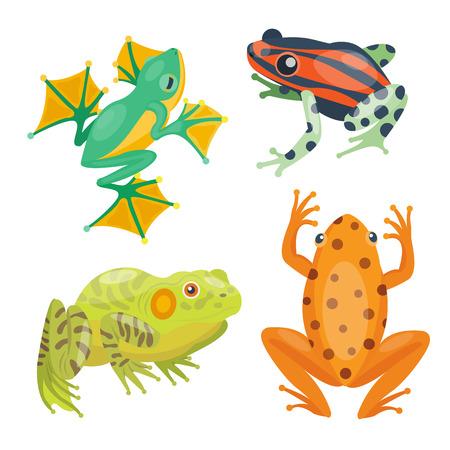 croaking: Frog cartoon tropical animal cartoon nature icon funny vector illustration.