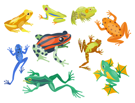 croaking: Frog cartoon tropical animal cartoon nature icon funny and isolated mascot character