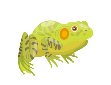 Frog cartoon tropical green animal cartoon nature icon funny and isolated mascot character wild funny forest toad amphibian vector illustration. Illustration