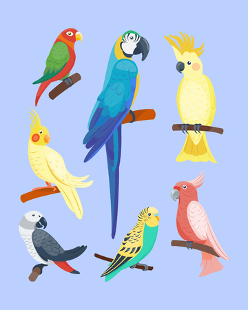 Cartoon tropical parrot wild animal bird vector illustration wildlife feather zoo color nature vivid. Banco de Imagens - 76482539