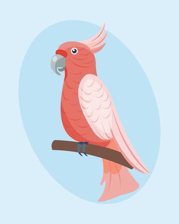 Cartoon tropical parrot wild animal bird vector illustration wildlife feather zoo color nature vivid. Illustration