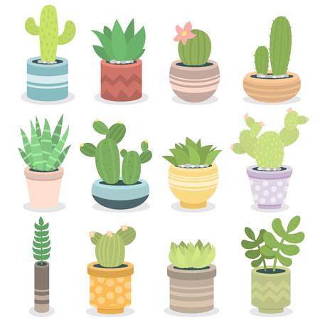 Cactus nature green succulent tropical plant vector illustration. Ilustração