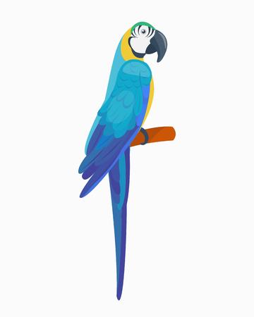 Cartoon tropical parrot wild animal bird vector illustration wildlife feather zoo color nature vivid. Иллюстрация