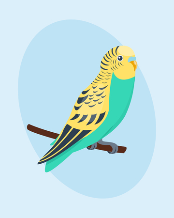 Cartoon tropical parrot wild animal bird vector illustration wildlife feather zoo color nature vivid. Illustration