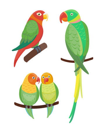Cartoon tropical parrot wild animal bird vector illustration wildlife feather zoo color nature vivid. Иллюстрация
