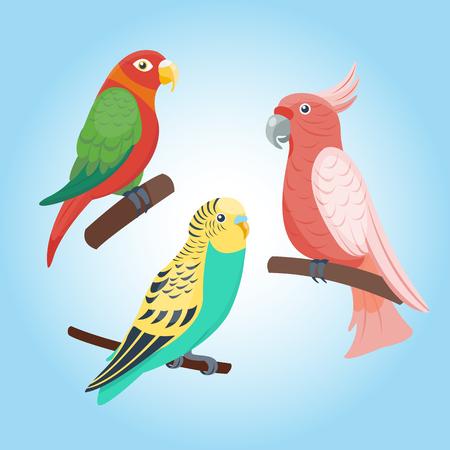 Cartoon tropical parrot wild animal bird vector illustration wildlife feather zoo color nature vivid. Ilustração