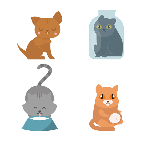 grey cat: Cute cats character different pose funny animal domestic kitten vector illustration. Illustration
