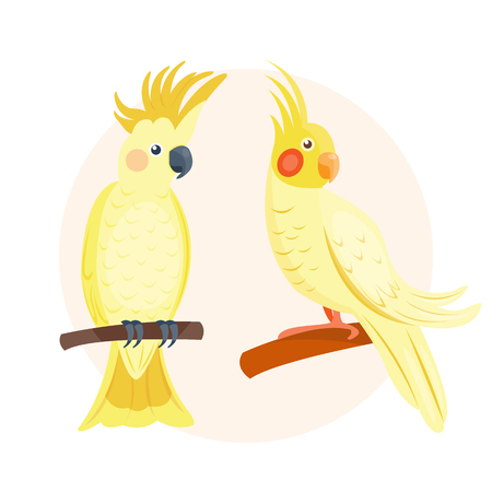 Cartoon tropical yellow parrot wild animal bird vector illustration wildlife feather zoo color nature vivid. Illustration