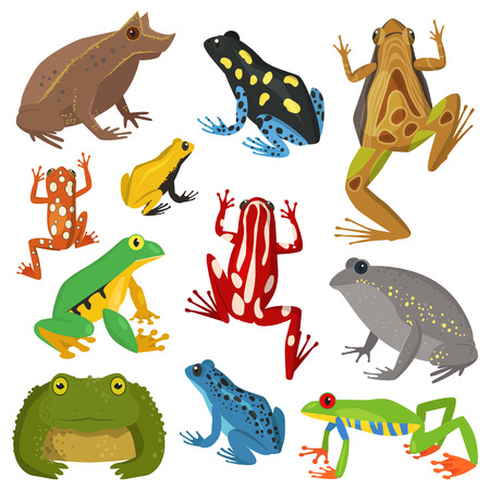 Frog cartoon tropical animal cartoon amphibian vector illustration.