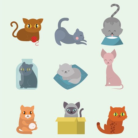 Cute cats character different pose funny animal domestic kitten vector illustration. Illustration