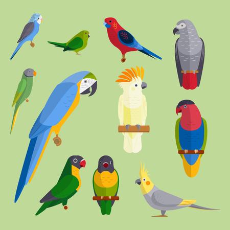 De papegaaienvogels broeden van het de onderwijs kleurrijke huisdieren van de soorten dierlijke aard tropische van het onderwijs vectorillustratie Stock Illustratie