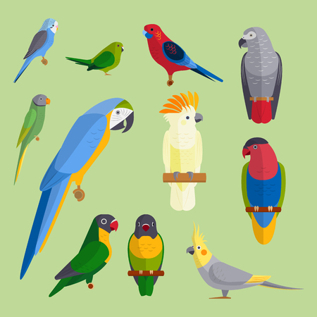 Parrots birds breed species animal nature tropical parakeets education colorful pet vector illustration