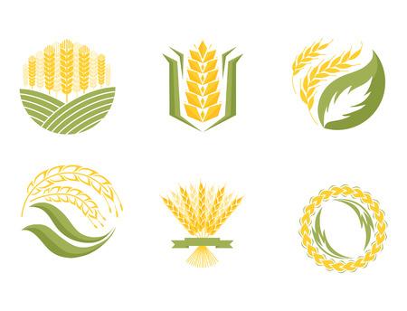 Cereal ears and grains agriculture industry or logo badge design vector food illustration organic natural symbol Illustration