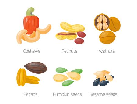 Piles of different nuts peanut walnut cashew pecans tasty seed vegetarian nutrition vector illustration