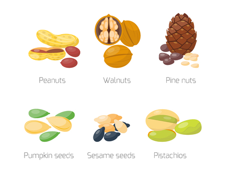 Piles of different nuts pistachio peanut walnut tasty seed vegetarian nutrition vector illustration