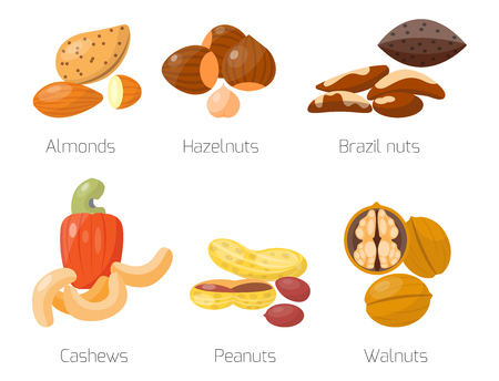 Piles of different nuts hazelnut almond peanut walnut cashew tasty seed vector illustration