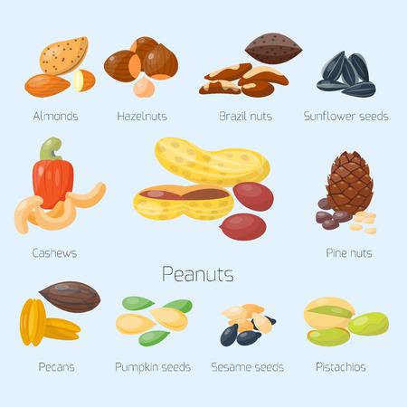 Piles of different nuts pistachio hazelnut almond peanut walnut cashew chestnut tasty seed vector illustration