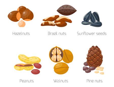 Piles of different nuts hazelnut almond peanut walnut tasty sunflower seed vector illustration