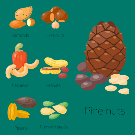 Piles of different nuts hazelnut almond peanut walnut cashew tasty seed vector illustration