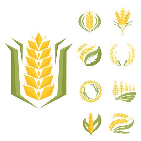 Cereal ears and grains agriculture industry or logo badge design vector food illustration organic natural symbol 向量圖像