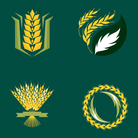 produits céréaliers: Cereal ears and grains agriculture industry or logo badge design vector food illustration organic natural symbol Illustration