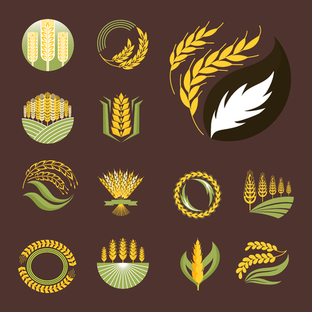 Cereal ears and grains agriculture industry or logo badge design vector food illustration organic natural symbol Çizim