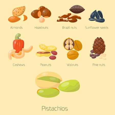 異なるナッツ ピスタチオ ヘーゼル ナッツ アーモンド ピーナッツくるみカシュー ナッツ風味がよい種の杭ベクトル イラスト