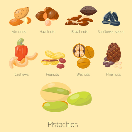 Piles of different nuts pistachio hazelnut almond peanut walnut cashew tasty seed vector illustration