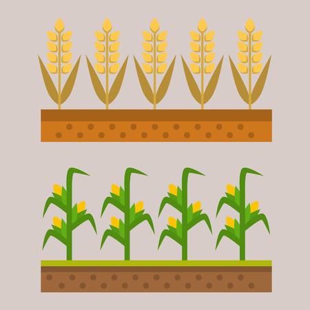 Vector farm harvesting field agriculture horticulture healthy natural land vegetarian vegetable illustration.