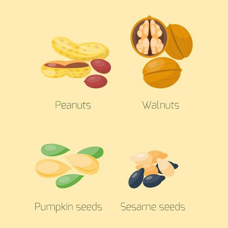pumpkin seeds: Piles of different nuts pistachio hazelnut almond peanut walnut chestnut tasty seed vector illustration