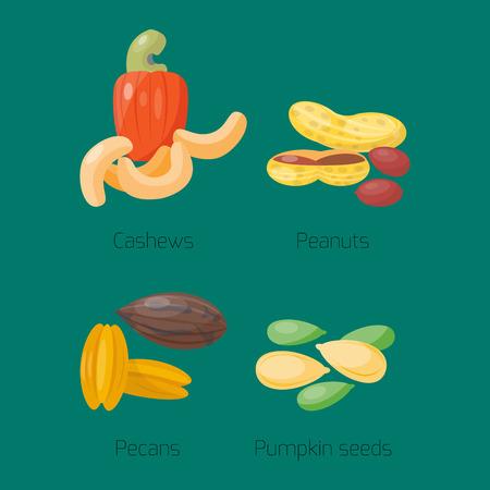Piles of different nuts peanut cashew nutrition tasty seed vector illustration Illustration