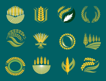 cultivate: Cereal ears and grains agriculture industry or logo badge design vector food illustration organic natural symbol Illustration