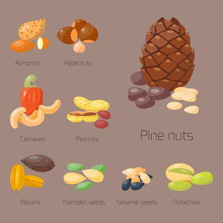 Stapel der unterschiedlichen Nusspistazienhaselnussmandelerdnuss-Acajoubaumkastanie geschmackvolle Samen-Vektorillustration Standard-Bild - 80790314