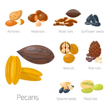 Montones de diferentes nueces pistacho avellana almendra maní nuez sabroso semilla vector illustration Foto de archivo - 80837458