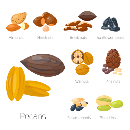 Piles of different nuts pistachio hazelnut almond peanut walnut tasty seed vector illustration