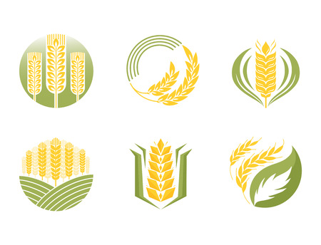 Cereal ears and grains set for agriculture industry or logo badge design vector food illustration organic natural wheat icon healthy bread agriculture label farming autumn product. Illustration