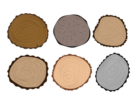 Wood slice texture tree circle cut raw material set detail plant years history textured rough forest vector illustration.