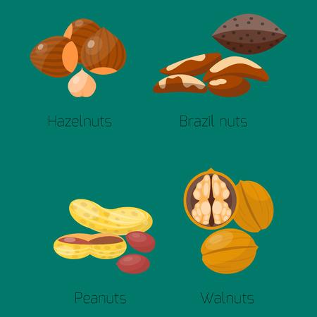 Piles of different nuts hazelnut peanut walnut brazil tasty seed vegetarian nutrition vector illustration