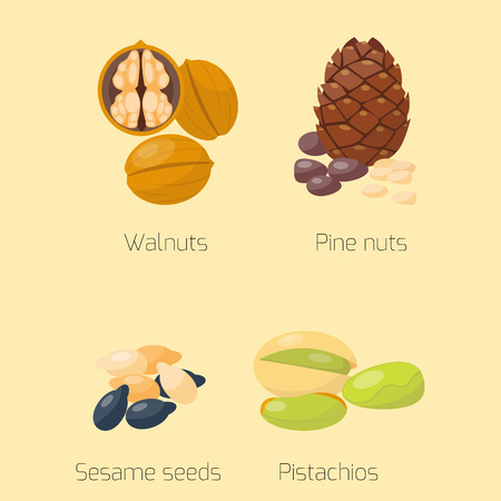 Piles of different nuts pistachio walnut tasty seed vegetarian nutrition vector illustration